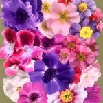 pop-up-flowers