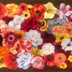 the-vitality-of-flowers