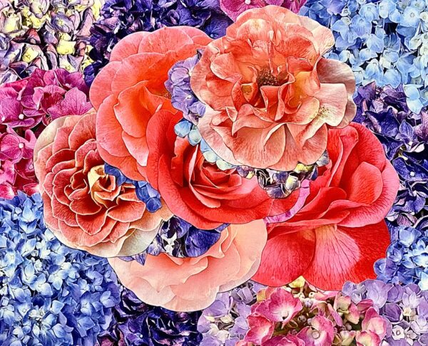 hydrangeas-with-roses