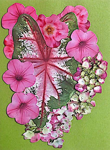 leaf-wearing-pink-green